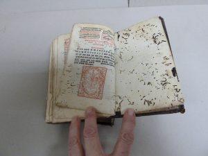 interior libro malestado insectos